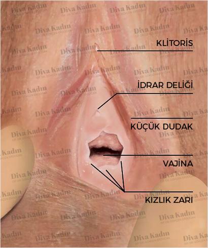 kızlı zarı (hymen) anatomisi